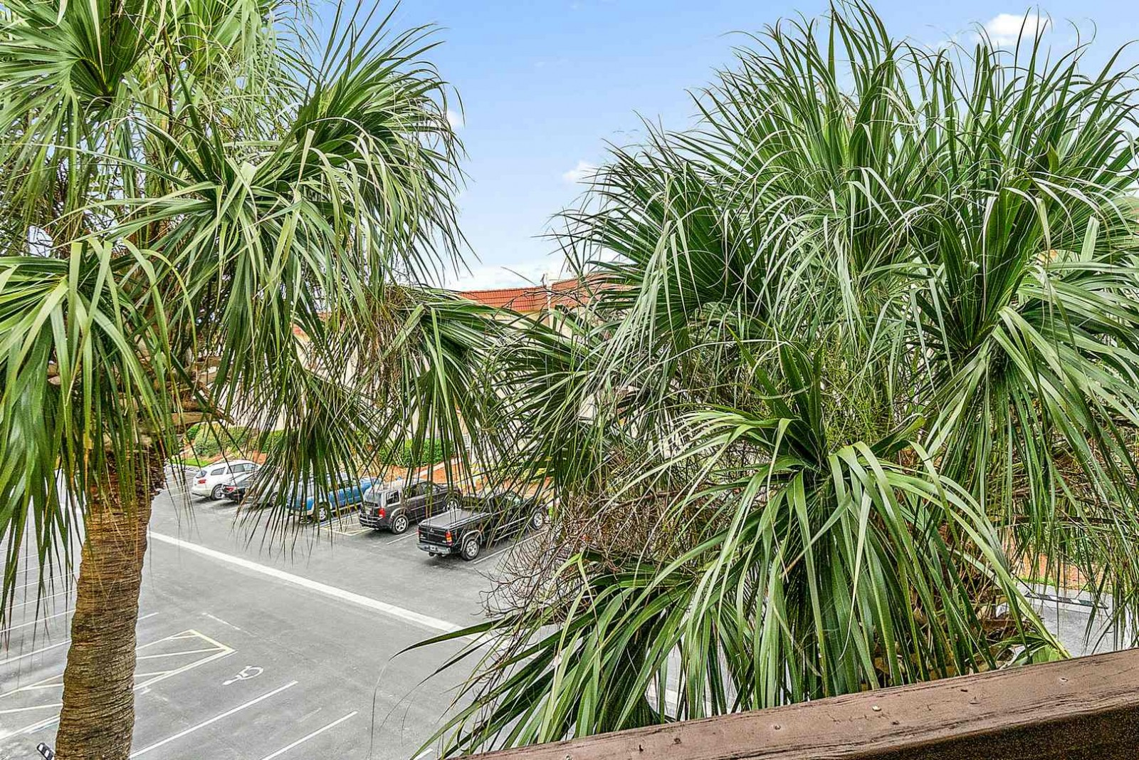 Patio Palms